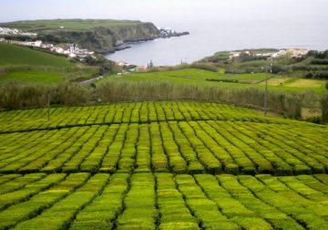 Ruta guiada a les Açores