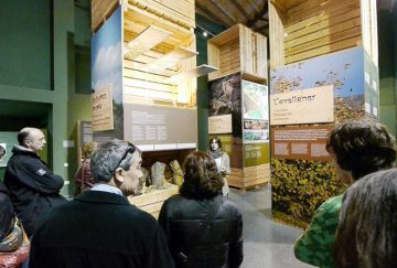 Guided tour - History and olive oil - Mari Carmen Granados