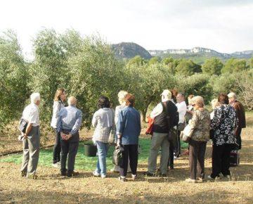 Olive tour - Living on the land - Mari Carmen Granados