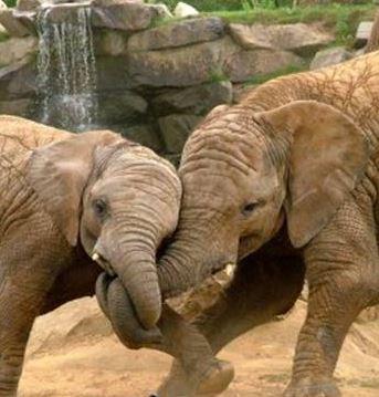 Zoo bioparc de valencia - Bioparc precios valencia ...